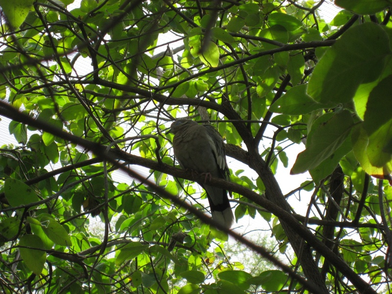Bird_in_tree
