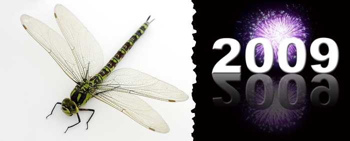 Dragonfly_is_one