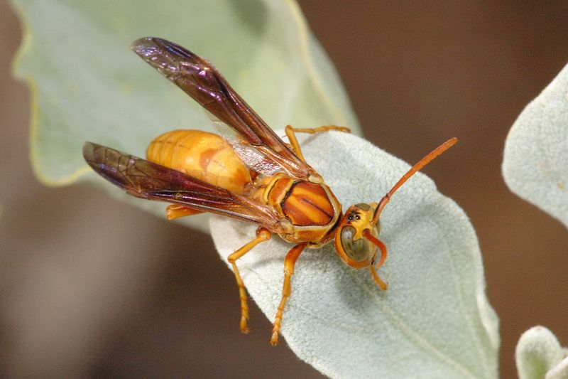 Misc_wasp_102205_05