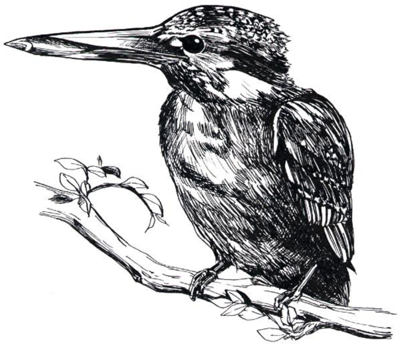 04kingfisher