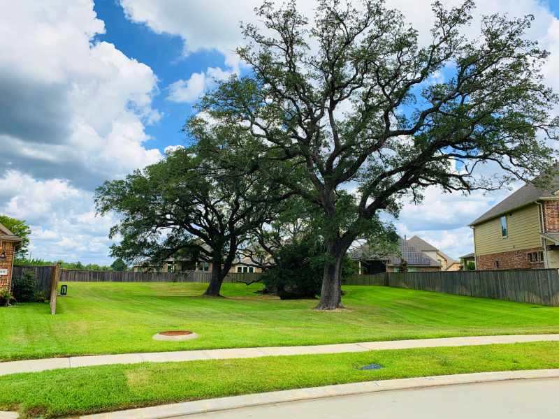 T01 Tree at Hilltop Valley and Jacobs Creek